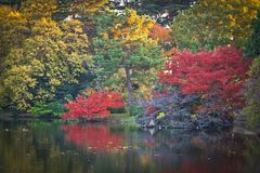 Autumn Leaves giallo, alberi di colore di caduta Immagine Stock