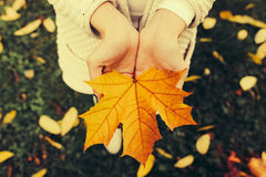 Autumn leaves in girl hands Stock Photos