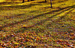 Autumn leaves on glade in park Royalty Free Stock Photo