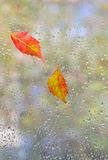 Autumn  leaves on glass Stock Photography