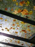 Autumn leaves on glass roof stock photography