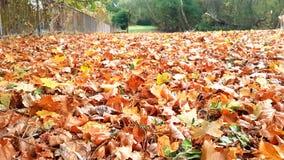 Autumn Leaves Gloucester Park Imágenes de archivo libres de regalías