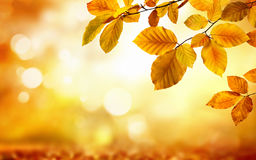 Autumn leaves on glowing blurry background Stock Photos