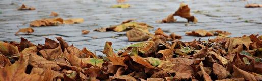 Autumn, Leaves, Golden Autumn Stock Photo