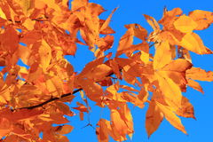 Changing Colors Royalty Free Stock Image