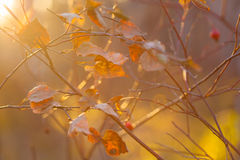 Autumn leaves. Golden leaves on sun light Royalty Free Stock Photos