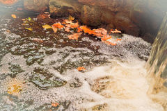 Autumn leaves are gone by stream Royalty Free Stock Photos