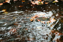Autumn leaves are gone by stream Stock Photography