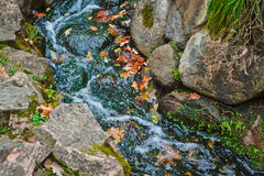 Autumn leaves are gone by stream Royalty Free Stock Photography