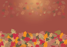 Autumn leaves on the gradient background Stock Images