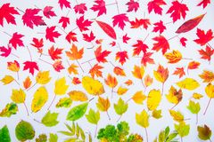 Autumn leaves gradient colorful rainbow leaf pattern fall colors flat lay, top view. Seasonal background. Autumn leaves gradient colorful rainbow leaf pattern stock images