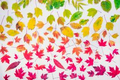 Autumn leaves gradient colorful rainbow leaf pattern fall colors flat lay, top view. Seasonal background. Autumn leaves gradient colorful rainbow leaf pattern royalty free stock images