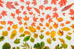 Autumn leaves gradient colorful rainbow leaf pattern fall colors flat lay, top view. Seasonal background. Vintage toning. Autumn leaves gradient colorful royalty free stock photos