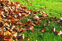 Autumn Leaves and Grass Stock Photos