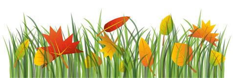 Autumn leaves on the grass Royalty Free Stock Photography