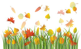Autumn leaves on the grass. Colorful autumn leaves on the green grass illustration Stock Photos