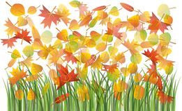 Autumn leaves on the grass Royalty Free Stock Image