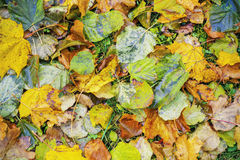Autumn leaves on the grass Stock Image