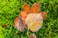 Autumn leaves on grass. Close up view of autumn leaves on grass royalty free stock photography