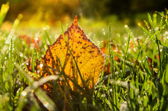 Autumn leaves on grass Royalty Free Stock Images