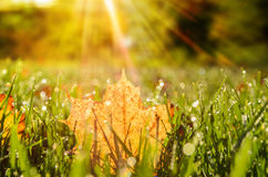 Autumn leaves on grass Stock Photos