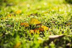 Autumn leaves on the grass Stock Photography