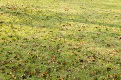 Autumn leaves on the grass covered with red Royalty Free Stock Photos