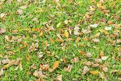 Autumn leaves on the grass Stock Images