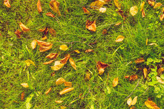 Autumn leaves on grass Stock Image