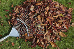 Autumn leaves on grass lawn Royalty Free Stock Photos