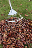 Autumn leaves on grass lawn Stock Photos