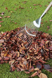 Autumn leaves on grass lawn Stock Photography