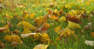 Autumn leaves on autumn grass. stock video footage