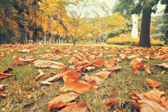 Autumn leaves on grass in Luxembourg Gardens, Paris, France. Stock Image