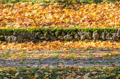 Autumn leaves on grass. Path in the park covered with fallen leaves. Autumn background Stock Image