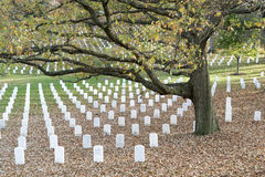 Autumn leaves and grave markers on Veteran's Day. ARLINGTON, VIRGINIA, USA - NOVEMBER 11, 2015: Remebering those who gave their lives for freedom on a beautiful royalty free stock photos