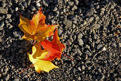 Autumn leaves on gravel Stock Images