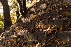 Autumn leaves on the gray rocks stock photos