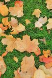 Autumn leaves on green grass Stock Photography