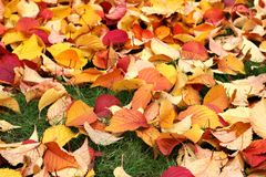 Autumn leaves on green grass Stock Photo