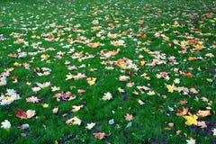 Autumn leaves. On green grass Stock Photos