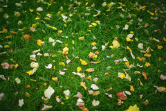 Autumn leaves and green grass Stock Photo
