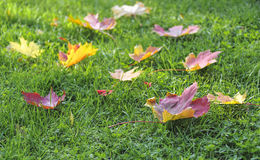 Autumn leaves on green grass Stock Photo