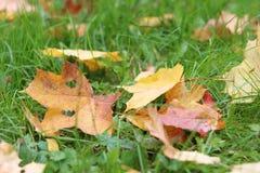 Autumn leaves on green grass Stock Photos