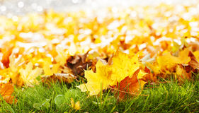 Autumn leaves on green grass Stock Photos