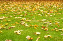 Autumn leaves on a green lawn Royalty Free Stock Photos