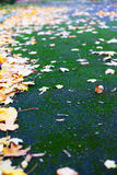 Autumn leaves and green moss Stock Photography