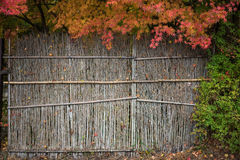 Autumn leaves green red maple border with bamboo background Royalty Free Stock Photography