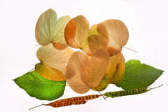 Autumn leaves green yellow nostalgy Stock Images