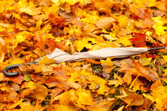 Autumn leaves on the ground Royalty Free Stock Photography